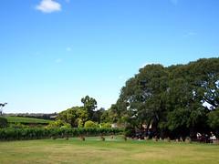 Cullen Wines, Caves Road