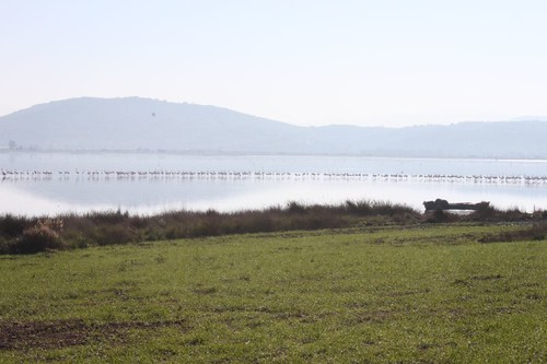20111228_1673_flamingoes