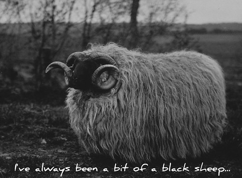 A Bit of a Black Sheep