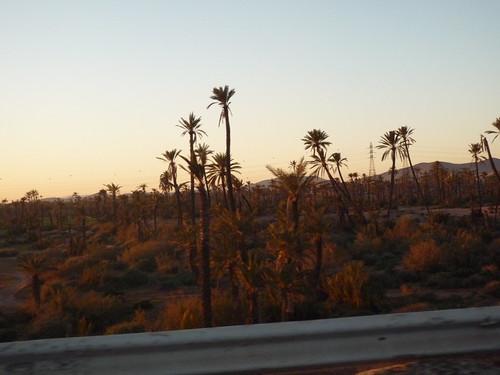 bosque de palmeras