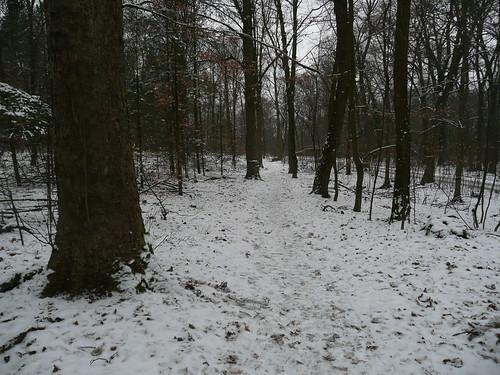 ForestBerlin