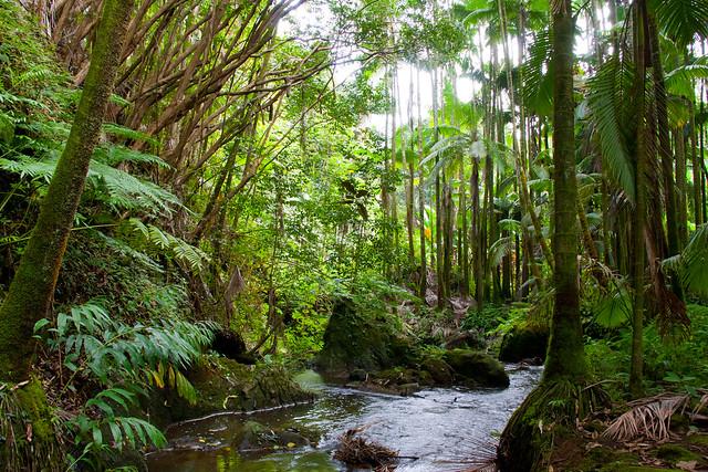 World Botanical Gardens Hilo