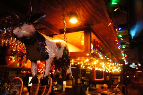 Cow, Bar and Christmas Lights