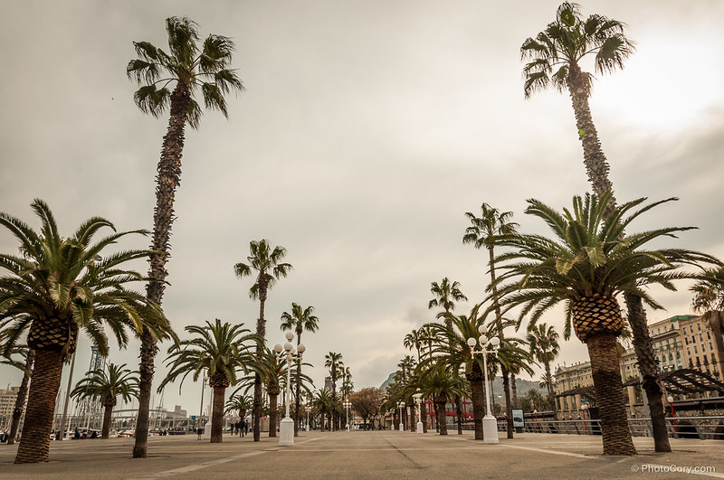 Palm trees in Barcelona, near the beach