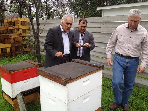 Showing our guests the bees