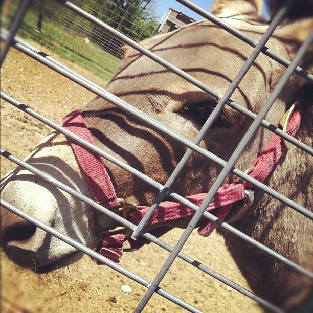 now I want a donkey.