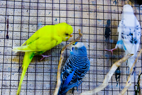 Birds by sibasahu