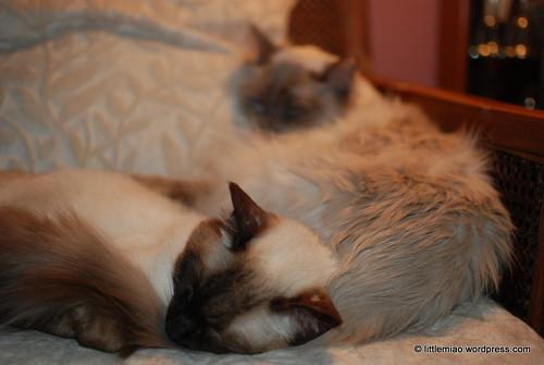 tashi's pillow