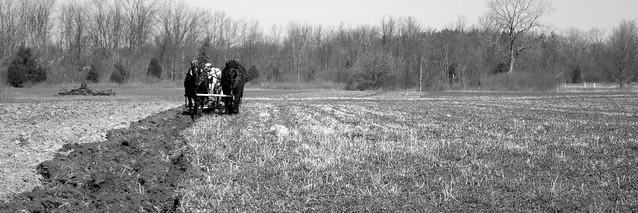 Spring Plowing 3
