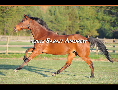 Wizard's daily breeze on the turf