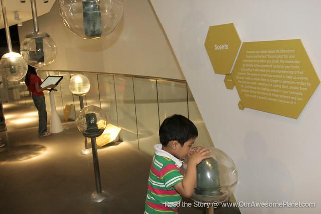 The Mind Museum @ BGC-142.jpg