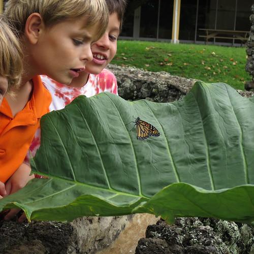 Summer Camp courtesy of Montessori of Maui