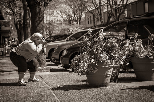 Flowers on Park Street by Terry Schmidbauer