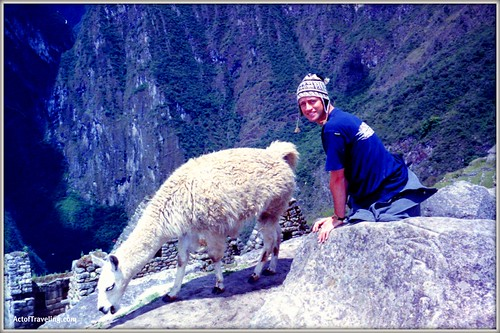 Me and a lovely llama at Machu Picchu