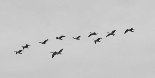 Fåglar i skyn