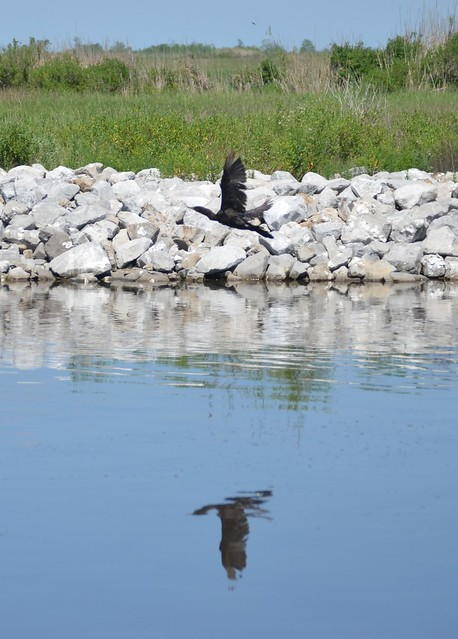 Bird Reflection 2
