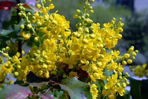 Arbres en fleurs HD-007