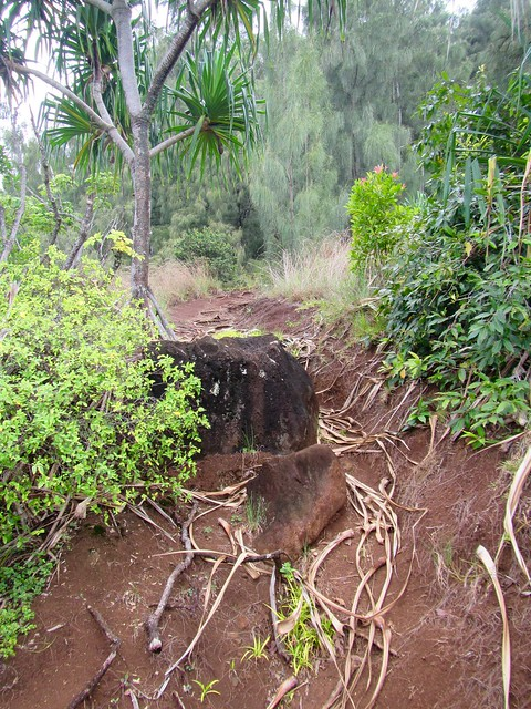 Picture from the Kapa'ele'ele Trail