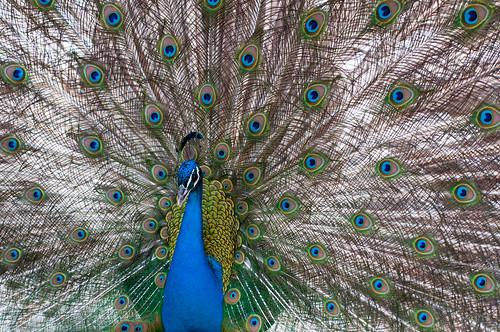 Verdes plumas tienes