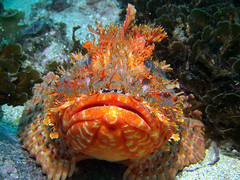 Sealife Photo of the Month Shot - Thank You Sealife :-)