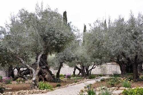 Ierusalim (1 of 1)-109