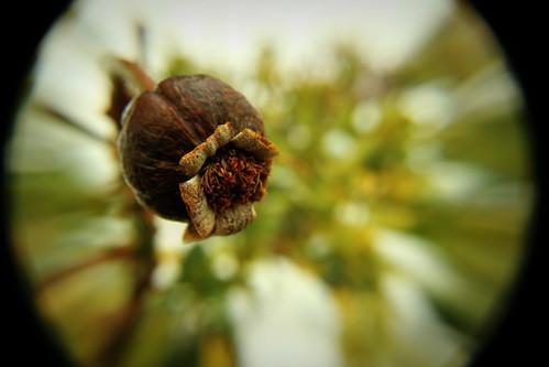 Winter rose by Moniquezzz