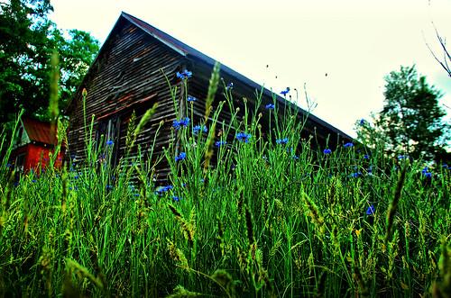 Mountville Flowers