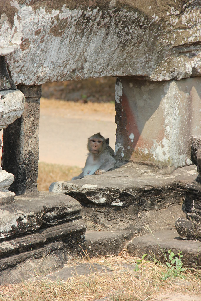 Cranky Monkey at Angkor Wat