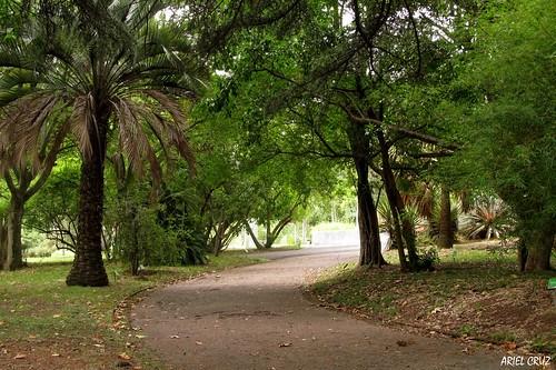 365-22   Jardín Botánico Profesor Atilio Lombardo - Botanical Garden Professor Atilio Lombardo (Montevideo)   Amor - Love