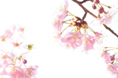 春いっぱい