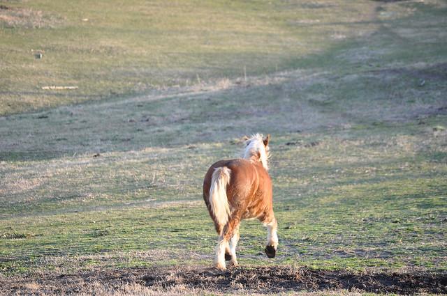 farmgirl-0174.jpg