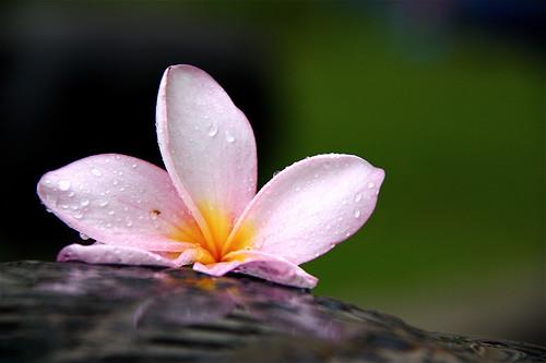 Same day, Rainy Morning by vishangshah