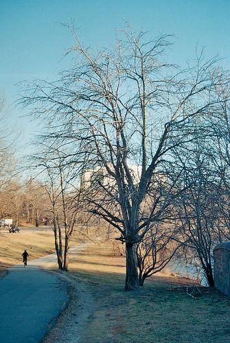 Apple tree, pre-spring
