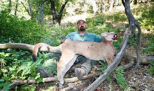 5d416a80c4282 mataron pumas por petición de cazadores | mqh2