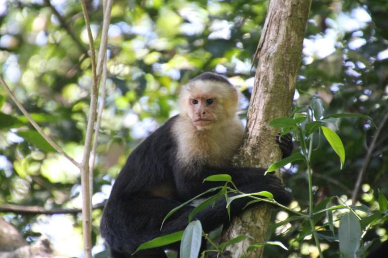 See interesting animal at Manual Antonio National Park, Costa Rica