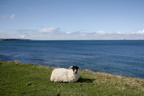| Apr 12 | scotland is for sheep, rams, and other furry animals