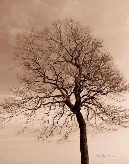 A Sephia Tree