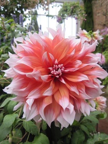 Flower at Wintergarden