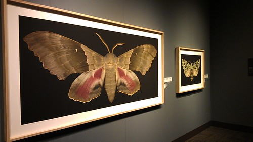 Moth exhibit