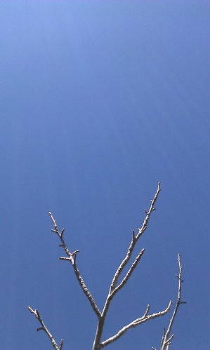 Branch and blue sky