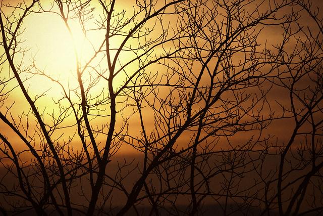 Late Winter, Low Sun #01