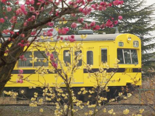 梅の花と1007F