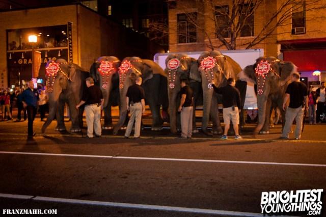 12-03_elephants119-117