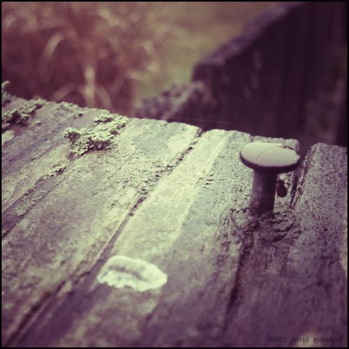 02.20.2012 :: 366/51 by Echo9er