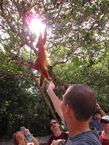 18/2/2012 - Floresta dos Macacos (Rio Tarumã/AM)