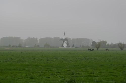 Biking to the Kinderdijk