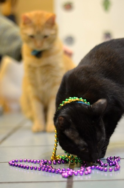 Luna Checks Out the Beads
