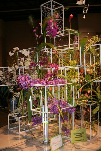 Orchids in cubes
