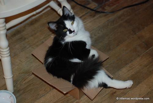 sprocket box 2-11-2012 6-39-49 PM