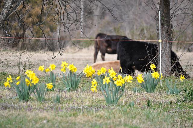 farmgirl-0071.jpg